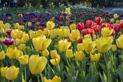 Красивое цветение цветка на саде Descanso Стоковое Изображение
