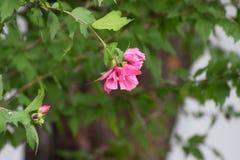 Красивое цветение Стоковая Фотография