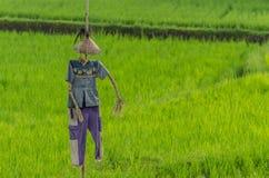 красивое чучело в поле риса Стоковые Изображения