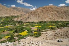 Красивое яркое желтое поле рапса, зеленые деревья и традиционный Стоковое Изображение