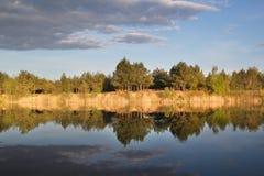 Красивое ясное озеро около леса Стоковая Фотография RF