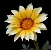 Красивое flover gerbera Стоковые Фото