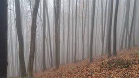 Красивое forrest в горных вершинах Стоковые Изображения RF