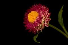 Красивое Kata в красном цвете Стоковое Изображение