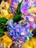 Красивое Mother& x27; цветки дня s стоковое изображение rf