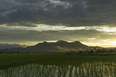 Красивое ricefield Стоковое Изображение RF