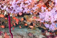 Красивое softcoral стоковая фотография rf