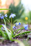 Красивой цветки покрашенные весной в саде Стоковые Изображения RF
