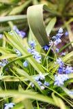 Красивой цветки покрашенные весной в саде Стоковые Изображения