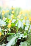 Красивой цветки покрашенные весной в саде Стоковые Фотографии RF