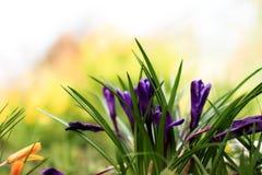 Красивой цветки покрашенные весной в саде Стоковое фото RF