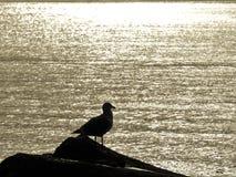Красиво взгляд Стоковая Фотография