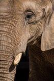 Красиво выдержанный слон Стоковое Изображение