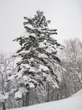Красиво живописный снег покрыл деревья, следовать сильным снегопадом стоковые изображения