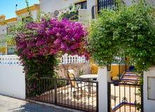Красиво зацветая бугинвилия розовые flovers в входе к интерьеру дома Испания Стоковые Фото