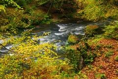 Красиво лес осени реки пропуская стоковое изображение