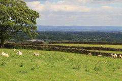 Красиво произведенные каменные стены, северный Йоркшир, Англия Стоковые Фотографии RF