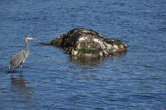Красиво птица Стоковое Изображение