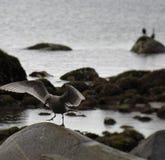 Красиво птица Стоковое Изображение RF