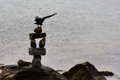 Красиво птица Стоковое фото RF