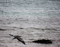 Красиво птица Стоковое Фото