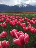 Красиво цветок Стоковая Фотография RF
