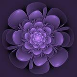 Красивые абстрактные цветок, синь и фиолет фрактали иллюстрация штока
