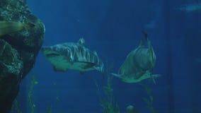 Красивые акулы в аквариуме место подводное Стоковая Фотография RF