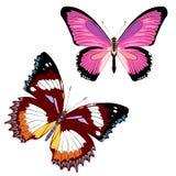Красивые бабочки цвета, изолированные на белизне Стоковые Фотографии RF