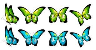 Красивые бабочки цвета, изолированные на белизне Стоковые Изображения RF