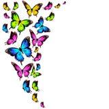 Красивые бабочки цвета, комплект, изолированный на белизне Стоковые Изображения RF