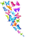 Красивые бабочки цвета, на белизне иллюстрация штока