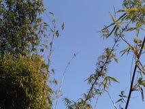 Красивые бамбуки стоковые фотографии rf