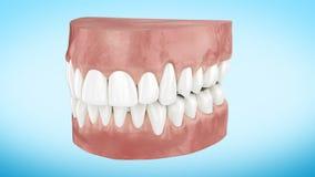 Красивые белые чистые зубы поворачивая близко вверх по анимации 3d Канал альфы Ультра HD 4k 3840x2160 акции видеоматериалы