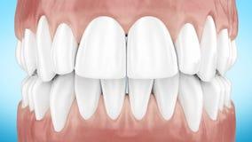 Красивые белые чистые зубы сигналят близко вверх по анимации 3d Канал альфы полное HD 1920x1080 видеоматериал