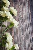 Красивые белые гвоздики Стоковое Фото