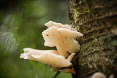 Красивые белые грибы растя на коре дерева в лете Стоковые Фотографии RF