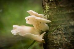 Красивые белые грибы растя на коре дерева в лете Стоковое Фото