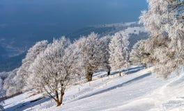 Красивые белые, который замерли деревья на предпосылке голубого неба рисуночно стоковая фотография rf