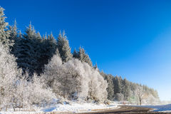 Красивые белые, который замерли деревья на предпосылке голубого неба рисуночно стоковые фото