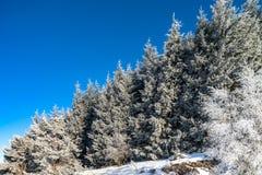 Красивые белые, который замерли деревья на предпосылке голубого неба рисуночно стоковые изображения rf