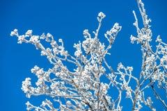 Красивые белые, который замерли деревья на предпосылке голубого неба рисуночно стоковая фотография
