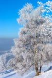 Красивые белые, который замерли деревья на предпосылке голубого неба рисуночно стоковые изображения