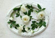Красивые белые розы, винтажные рамки и предпосылка бархата Стоковая Фотография