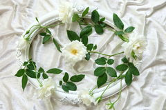 Красивые белые розы, винтажные рамки и предпосылка бархата Стоковое Фото
