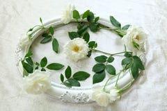 Красивые белые розы, винтажные рамки и предпосылка бархата Стоковое фото RF