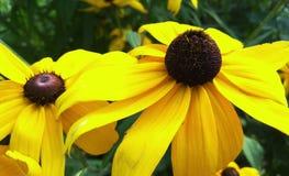 Красивые большие желтые цветки, стоковое фото