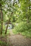 Красивые ветви blossoming padus сливы вишни птицы в t Стоковые Фотографии RF