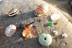 Красивые вещи получают помытыми вверх по пляжам Стоковая Фотография