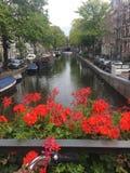 Красивые виды в Амстердаме стоковое фото rf